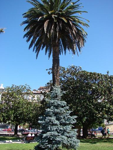 La umbra marilor palmieri