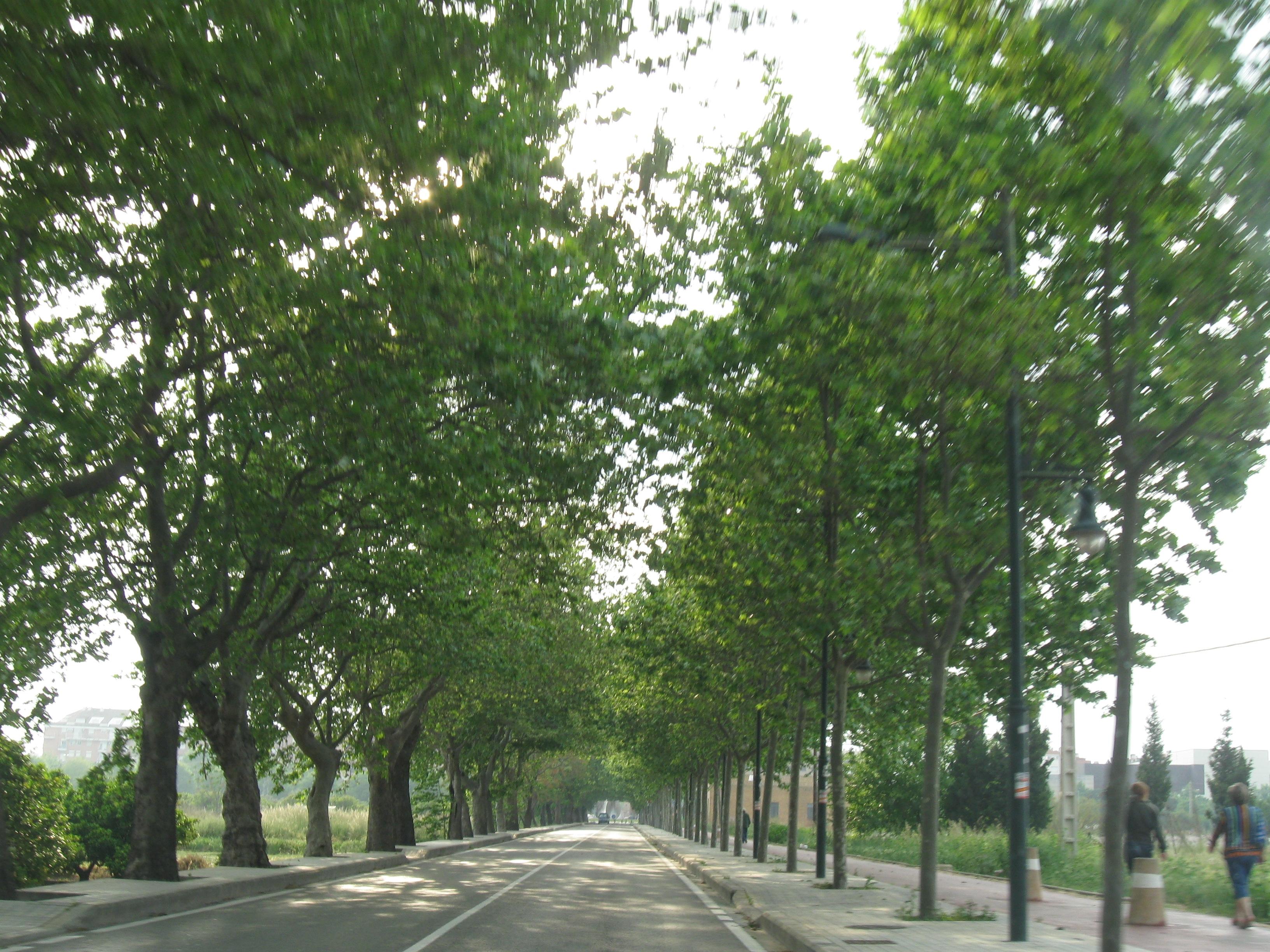 Evergreen (1)