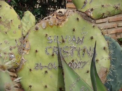 Iubiţi-vă pe cactuşi: silvian şi cristina