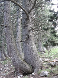 9. Zeus, transformat în copac, posedând-o pe Muma Pădurii, pe când era fată