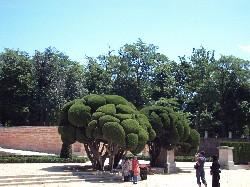 19. Copacii fericirii
