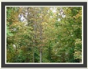 Pădure de toamnă