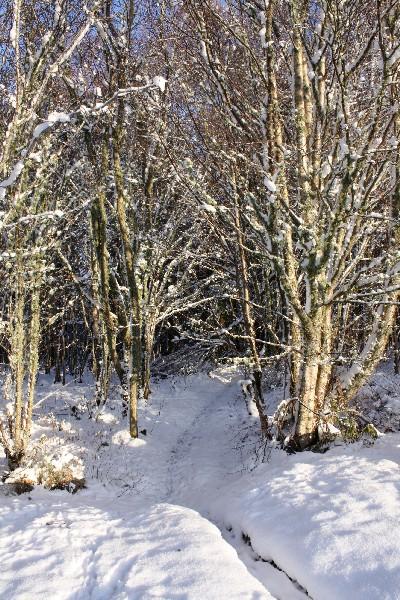 2011 Winter Tale