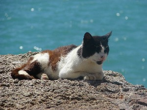Sea Cat